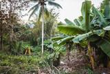 Thai jungle scene