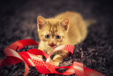 Small cat play with red Christmas ribbon