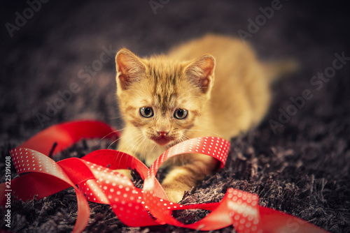 Small cat play with red Christmas ribbon - 225191608