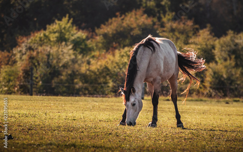 Horse on the meadow. © Josef Svoboda