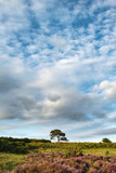 Stunning Summer sunset landscape image of Bratley View in New Forest National Park England - 225221466