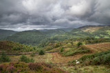 Landscape image of view from Precipice Walk in Snowdonia overlooking Barmouth and Coed-y-Brenin forest during rainy afternoon in September - 225221672