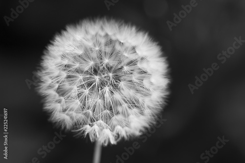 Close-up of dandelion seed against a background