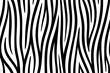 Zebra skin seamless background on vector graphic art.