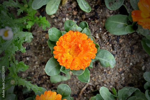 Foto Murales 꽃과 빗방울