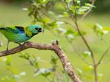 Bird Green and Blue