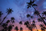 Silhouette of coconut palm tree at sunset on tropical beach - 225255202