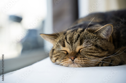 Leinwanddruck Bild Cute little sleeps copy-space. Banner