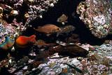 ascidia purple underwater photo coral reef - 225303831