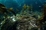 starfish underwater photo - 225303858