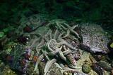 starfish underwater photo - 225306458