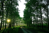 landscape road alley green trees - 225306622