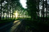 landscape road alley green trees - 225306628