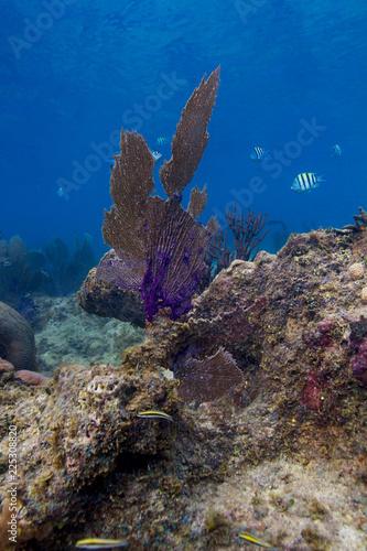 Foto Murales Coral fan in a reef