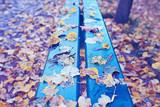 landscape bench in autumn park / October landscape in yellow park, autumn background - 225309255