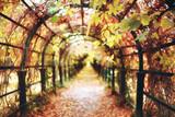 autumn landscape of the Peterhof / autumn park in the petersburg, autumn season in the yellow park - 225309263