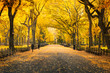 Leinwanddruck Bild - Herbst im Central Park in New York City, USA