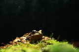 frog / nature background animal, frog sits on green moss, in nature, concept ecology - 225310020