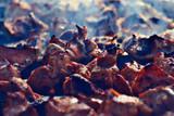 meat on charcoal shish kebab grill smoke - 225310801