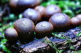 small mushrooms macro / nature forest, strong increase in poisonous mushrooms mold - 225310850