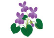 Vector illustration of spring flower Viola