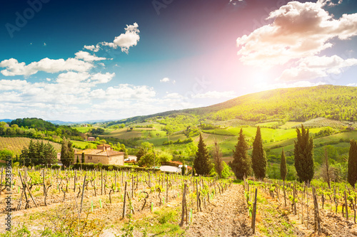 Vineyards in Tuscany, Italy. Beautiful summer landscape