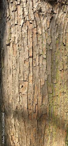 Holzstruktur - 225362868