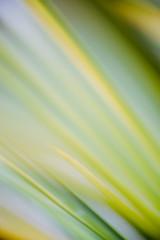 Gräser abstrakt