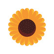 sunflower flower decoration natural flora - 225378893