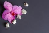 Fleur d'orchidée et pierres blanches - 225382882