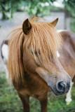 Pony horses on the farm