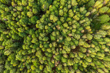 Green summer autumn forest aerial view © eugenegg