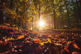 Herbstlicher Wald - 225395630