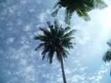 Palm - 225396622