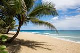 Palma in una spiaggia tropicale - 225407861