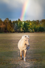 Do you see a horse or a unicorn under a rainbow?