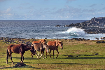 Herd of horses on the shore of the Pacific Ocean.