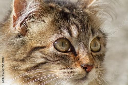 portrait of cat - 225461262