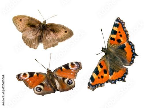 Schmetterlinge isoliert - 225463064