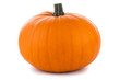 Quadro One orange pumpkin