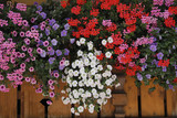 Bunte Blumen am Balkon