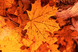 Leaves on the ground in autumn as a background - 225525026