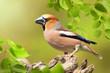 Leinwandbild Motiv Vögel 91