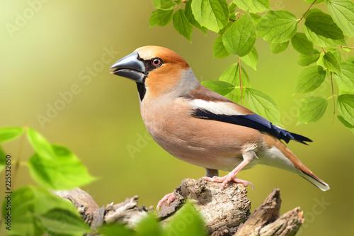 Vögel 91