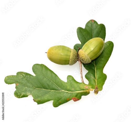 Leinwanddruck Bild Eicheln, Stieleiche, Quercus, robur