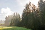 Nebel im Wald im Sonnenlicht