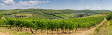 Panoramic view of a winery and vineyards in the rolling hills near Radda Chianti, Tuscany