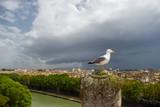 Seagull on a rock - Castel Sant'Angelo Italy