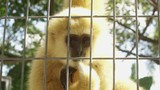 Funny closeup of monkey behind a fence - 225604400