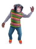 chimpanzé, singe, jeune, animal, habillé en homme, debout, souriant, accueillant, tenant quelque chose dans la main,